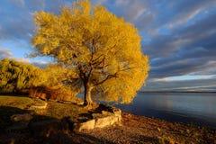 Kleurrijke boom op kust in de herfst Royalty-vrije Stock Fotografie