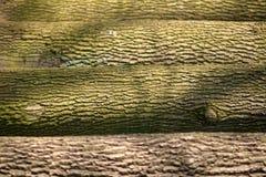 Kleurrijke boomstammen van bomen royalty-vrije stock afbeelding