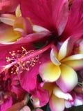 Kleurrijke Bos Stock Foto's