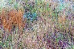 Kleurrijke bosjes van gras Royalty-vrije Stock Afbeeldingen