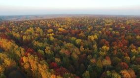 Kleurrijke bossen, de herfst, luchtmening stock videobeelden