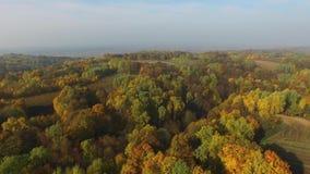 Kleurrijke bossen, de herfst, luchtmening stock footage
