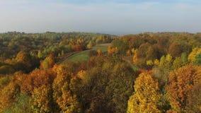 Kleurrijke bossen, de herfst, luchtmening stock video
