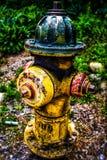 Kleurrijke brandkranenbrandkraan stock fotografie