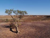 Kleurrijke Breakaways in Australië stock foto