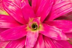 Kleurrijke bromelia's Royalty-vrije Stock Afbeeldingen