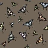 Kleurrijke butterflys Stock Foto
