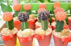 Kleurrijke Cactus Stock Foto's