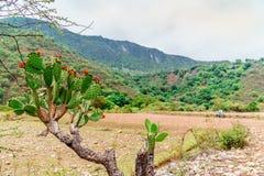 Kleurrijke Cactus voor berglandschap door Oaxaca stock fotografie