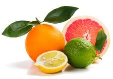 Kleurrijke Citrusvruchten royalty-vrije stock fotografie