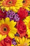 Kleurrijke close-up van weelderige de lentebloemen Royalty-vrije Stock Fotografie