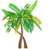 Kleurrijke Cocount-bomen, cocount, boom, bomen, tropica stock illustratie