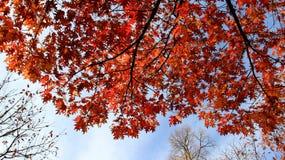 Kleurrijke Dalende Bladeren met Bewolkte Hemel royalty-vrije stock foto