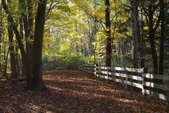 Kleurrijke dalingsbladeren op bosweg Royalty-vrije Stock Afbeeldingen