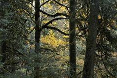 Kleurrijke dalingsbomen in een oud de groeibos Stock Afbeeldingen