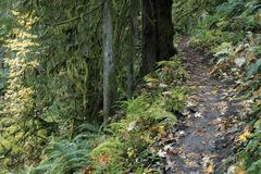 Kleurrijke dalingsbomen langs een beboste wandelingssleep Royalty-vrije Stock Fotografie