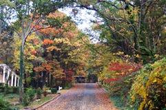 Kleurrijke Dalingsboom Gevoerde Weg Stock Afbeelding