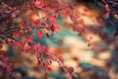 Kleurrijke dalingsflora Royalty-vrije Stock Fotografie