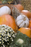 Kleurrijke dalingspompoenen en bloemen Royalty-vrije Stock Afbeeldingen