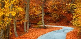 Kleurrijke dalingsweg Stock Foto's