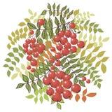 Kleurrijke de herfst bloemenachtergrond met lijsterbes Stock Foto's