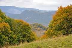Kleurrijke de herfst bosbomen Royalty-vrije Stock Afbeeldingen