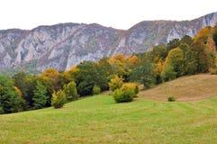 Kleurrijke de herfst bosbomen Stock Afbeelding