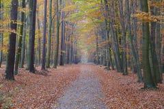 Kleurrijke de herfst bosweg & x28; T& x29; Stock Afbeeldingen