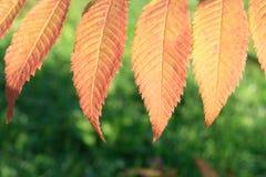Kleurrijke de herfstachtergrond Stock Afbeelding