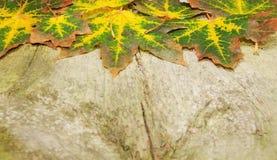 Kleurrijke de herfstachtergrond Stock Foto
