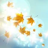Kleurrijke de herfstachtergrond. Stock Fotografie