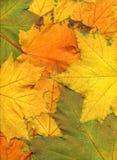 Kleurrijke de herfstachtergrond Stock Foto's