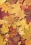 Kleurrijke de herfstachtergrond Royalty-vrije Stock Foto's