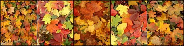 Kleurrijke de herfstachtergrond Royalty-vrije Stock Foto
