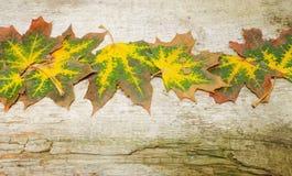 Kleurrijke de herfstachtergrond met esdoornbladeren Royalty-vrije Stock Foto
