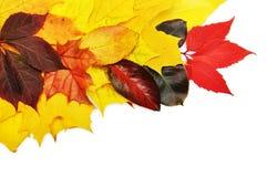 Kleurrijke de herfstbladeren Royalty-vrije Stock Fotografie