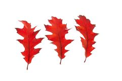 Kleurrijke de herfstbladeren. Royalty-vrije Stock Foto