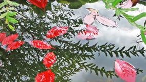 Kleurrijke de herfstbladeren die in het water nadenken stock video