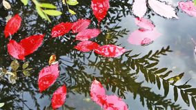 Kleurrijke de herfstbladeren die in het water nadenken stock footage