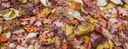 Kleurrijke de herfstbladeren die op grond leggen Mening van hierboven stock afbeeldingen