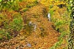 Kleurrijke de herfstbladeren die op het water drijven royalty-vrije stock fotografie