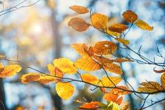 Kleurrijke de herfstbladeren met blauwe hemel Royalty-vrije Stock Foto
