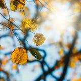 Kleurrijke de herfstbladeren met blauwe hemel Royalty-vrije Stock Afbeelding