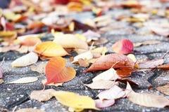 Kleurrijke de herfstbladeren op de bestrating, de herfstachtergrond stock afbeeldingen