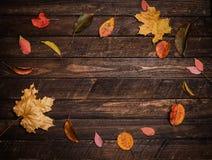 Kleurrijke de herfstbladeren op een donkere oude houten achtergrond Heldere aut Royalty-vrije Stock Fotografie