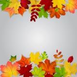 Kleurrijke de herfstbladeren op grijze achtergrond Stock Afbeelding