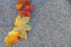 Kleurrijke de herfstbladeren op de vloer - achtergrond royalty-vrije stock afbeelding