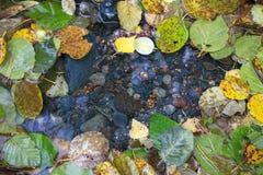Kleurrijke de herfstbladeren rond duidelijk water royalty-vrije stock foto