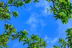 Kleurrijke de herfstbladeren tegen blauwe hemelachtergrond royalty-vrije stock afbeeldingen