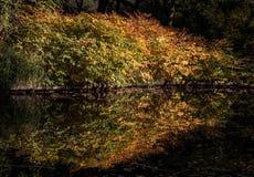 Kleurrijke de herfstbomen die in het water nadenken Royalty-vrije Stock Foto's